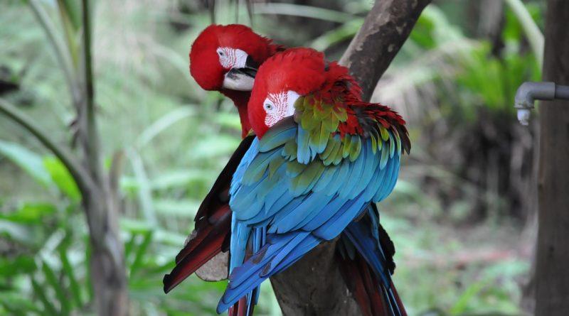 Mitt i mardrömsångesten slog papegojdillet till